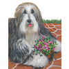 Precious Pet Paintings 18-in x 12.5-in Bearded Collie Pot of Roses Flag
