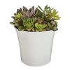 Exotic Angel Plants 1.31-Quart Succulent (L20922hp)