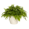 Exotic Angel Plants Fern Delilah in 1.45 Quart Ceramic Tabletop Planter