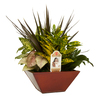 Exotic Angel Plants 8-in Croton in Planter (L20932hp)
