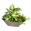 Exotic Angel Plants Euro Garden in 2.88 Quart Metal Tabletop Planter