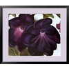 art.com 34-in W x 29-in H Floral and Botanical Framed Wall Art
