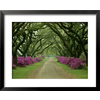 art.com 31-in W x 25-in H Floral and Botanical Framed Art