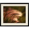 art.com 30-in W x 24-in H Floral & Botanical Framed Art