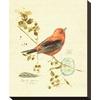art.com 9.5-in W x 12-in H Animals Canvas