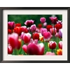 art.com 19.75-in W x 15.75-in H Floral and Botanical Framed Art