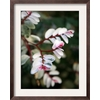 art.com 15.75-in W x 19.75-in H Floral and Botanical Framed Art