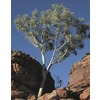 108.34-Gallon Ghost Gum (L14900)