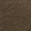 Dixie Group Active Family Exuberance II 119 Brown Textured Indoor Carpet