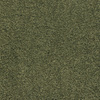 Dixie Group Trusoft Chimney Rock Green Textured Indoor Carpet