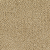 Dixie Group TruSoft TruSoft Gallery Yellow Textured Indoor Carpet