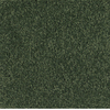 Dixie Group TruSoft TruSoft Gallery Green Textured Indoor Carpet