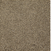Dixie Group TruSoft TruSoft Gallery Brown Textured Indoor Carpet