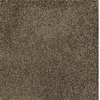 Dixie Group Trusoft Pompadour Brown/Tan Textured Indoor Carpet