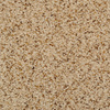Dixie Group TruSoft Feature Buy Brown Textured Indoor Carpet