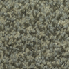 Dixie Group TruSoft Gallery Carefree Textured Indoor Carpet