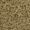 Dixie Group TruSoft Gallery Toledo Textured Indoor Carpet