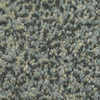 Dixie Group TruSoft Gallery Moody Textured Indoor Carpet