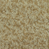 Dixie Group TruSoft Gallery Dashing Textured Indoor Carpet