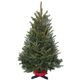 3-4-ft Fresh-Cut Fraser Fir Tabletop Christmas Tree