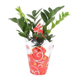 Shop House Plants at Lowes.com on