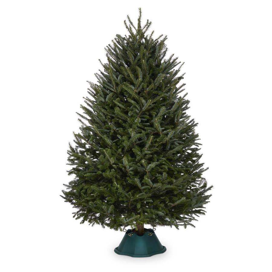 Shop 7-ft to 8-ft Fresh-Cut Fraser Fir Christmas Tree at ...