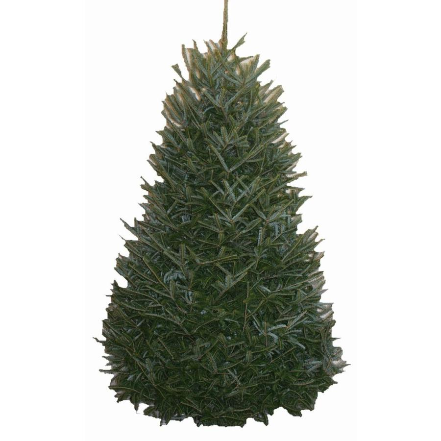 Where To Cut Christmas Trees: Shop 9-ft To 10-ft Fresh-Cut Fraser Fir Christmas Tree At