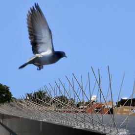 Bird-X Stainless Steel Bird Spikes, 24'