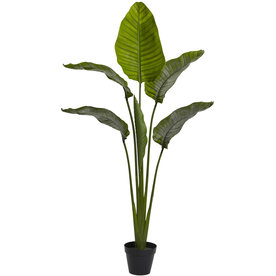 Nearly Natural 64-In Green Palm 5445